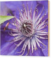 Pretty Purple Clematis Wood Print