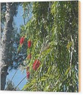 Pretty Red Furry Flowers Wood Print