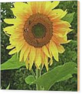 Pretty Sunflower  Wood Print