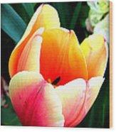 Pretty Tulip Wood Print