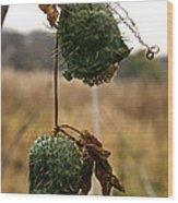 Prickly Bells Wood Print