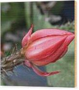 Prickly Bud Wood Print