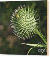 Prickly Globe Wood Print