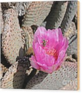 Prickly Pear Cactus Fertilized By Honey Bee Wood Print