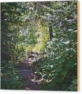 Priest Lake Trail Series IIi - Trail Shadows Wood Print
