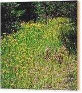 Priest Lake Trail Series Iv - Small Meadow Wood Print