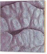 Primate Fingerprint Ridges, Sem Wood Print