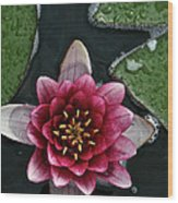 Primo Waterlily Wood Print