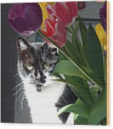 Princess The Cat And Tulips Wood Print