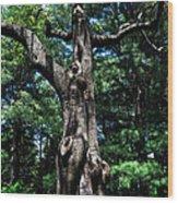 Princess Tree Wood Print
