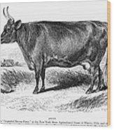 Prize Devon Cow, 1855 Wood Print