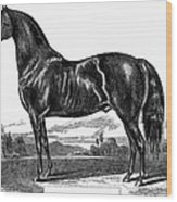 Prize Horse, 1857 Wood Print