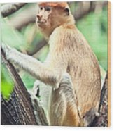 Proboscis Monkey Wood Print