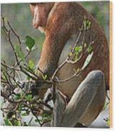 Proboscis Monkey Nasalis Larvatus Male Wood Print