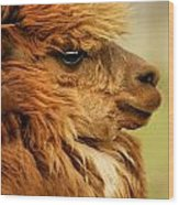 Profile Of A Camelid Wood Print
