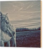 Profile Of A Horse Wood Print by Toni Hopper