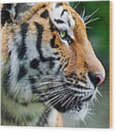 Profile Of A Siberian Tiger Wood Print