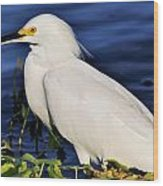 Profile Of A Snowy Egret Wood Print