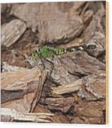 Profile Of Green Dragonfly Wood Print
