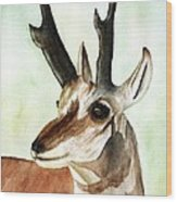 Pronghorn Magesty Wood Print