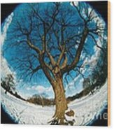 Prospect Park Tree Wood Print