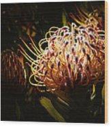 Protea Flower 10 Wood Print