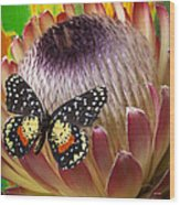 Protea With Speckled Butterfly Wood Print