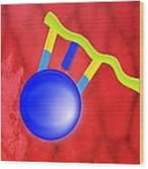 Protein Synthesis, Artwork Wood Print by Gombert, Sigrid
