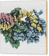 Protozoan Rna-binding Protein Complex Wood Print
