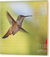 Proud Hummingbird Wood Print