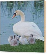 Proud Mother Swan Wood Print