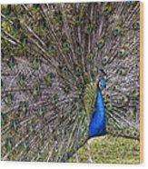 Proud Peacock At Leeds Castle Wood Print