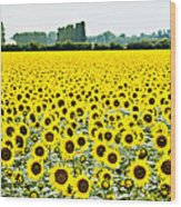 Provencial Sunflowers Wood Print
