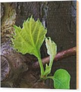 Pruning And New Growth Wood Print