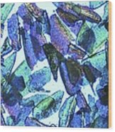 Psyllium, Light Micrograph Wood Print by Pasieka