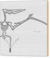 Pteranodon Longiceps Wood Print