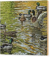 Ducks Unlimited 02 Wood Print