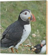 Puffin Wood Print by George Leask