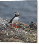 Puffin With Sand Eels Wood Print
