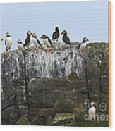 Puffins On A Cliff Edge Wood Print