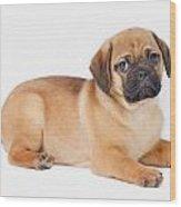 Pug Dog Wood Print