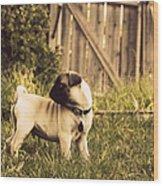 Pug Pose Wood Print
