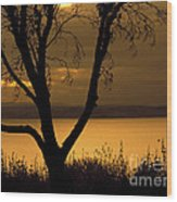 Pugent Sound Silhouetted Tree Wood Print
