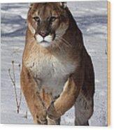 Puma At The Run Wood Print