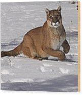 Puma On The Move Wood Print