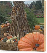 Pumpins And Gourds Wood Print