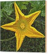 Pumpkin Flower 1 Wood Print