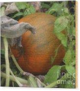 Pumpkin On The Vine Wood Print