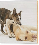 Pup Biting Lab On The Ear Wood Print by Mark Taylor