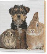 Pup, Guinea Pig And Rabbit Wood Print